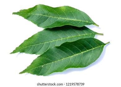 Three ash leaves isolated on white background