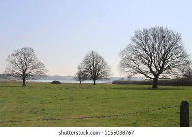 Three Autumn Trees