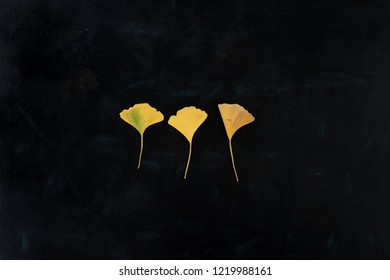 Three autumnal bright yellow gingko leaves on dark background with texture (flat lay)