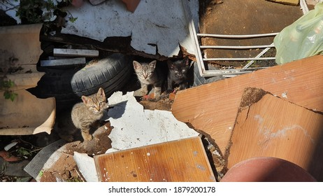 Three baby kittens abandoned in a scrap shelter amidst wood and worn tires looking for food. Naples, Italy