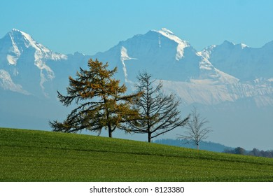 Three bare trees in a green field, against a range of snow-covered mountains, in the Autumn.
