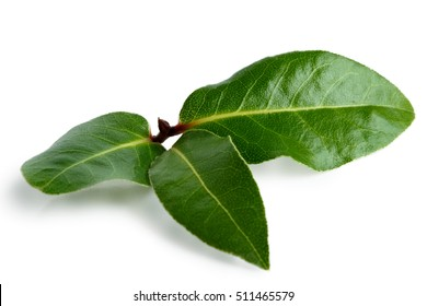 Three bay leaves isolated on white.