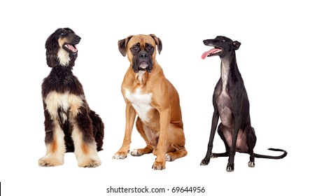 Three beautiful dogs of three different races on a over white background