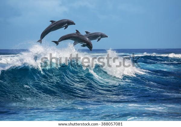 Три красивых дельфинов прыгают через ломающие волны. Гавайи Тихий океан пейзажи дикой природы. Морские животные в естественной среде обитания.