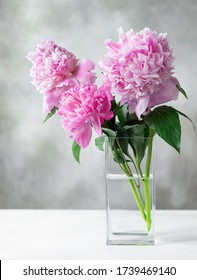 Three beautiful pink peonies in a square glass vase on a gray background. greeting card concept. copy space. vertical image