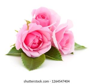 Three beautiful pink roses on a white background.