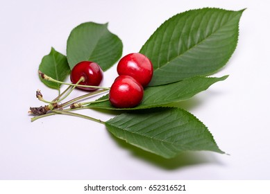Three beautiful red cherries with green leaves