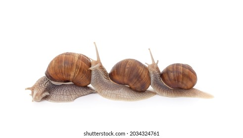 Three beautiful snails with isolated on a white background.
