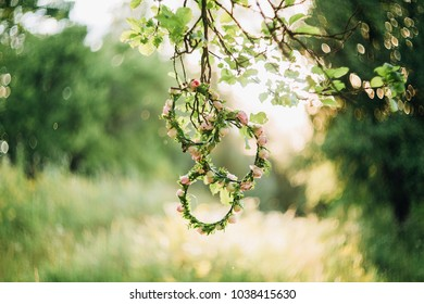 three beautiful wreaths of pink roses hang on a tree branch and the sun shines on them