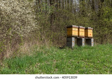 three beehives with bees in the spring garden