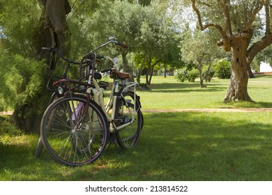 three bicycles standing by tree on grass in park