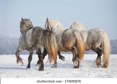 Three big imposing horses running