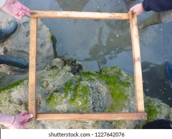 Three biologists holding a quadrat square frame for marine ecology flora and fauna sampling