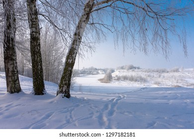 Three birch trees in the nature in winter on sunny day, with footprints on the snow near steep frozen river banks