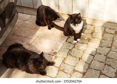 Three black cats outdoors. Stray cats in Istanbul. Cute cats on the sidewalk bask in the sun