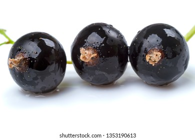 Three black currants on isolated on the white background