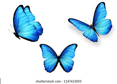 three blue butterflies isolated on white background