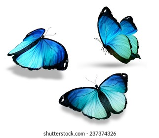 """Three blue butterfly """"morpho"""", isolated on white"""