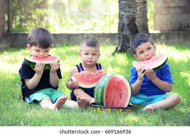 Three boys eat watermelon on the grass in the yard. Children and watermelon