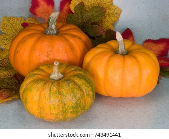 Three  bright orange and green pumpkins with Autumn leaves.