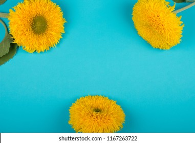 Three bright yellow sunflowers against a bright blue background (top view, copy space in the center for your text)