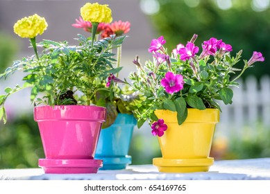 Three brightly colored garden pots in bright sunlight