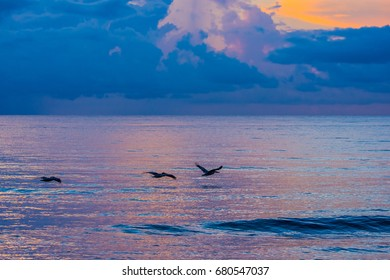 Three Brown Pelicans in flight over the pink and purple reflections of the morning sun on the ocean