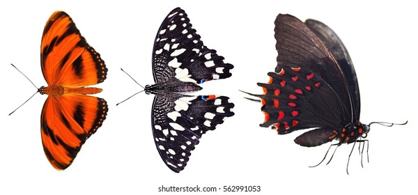 Three butterflies in deifferent black and red colors, isolated on white background