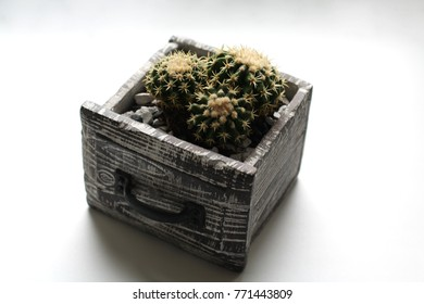 Three cacti isolated in a grey concrete drawer