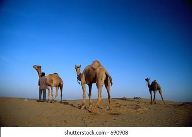 Three camels