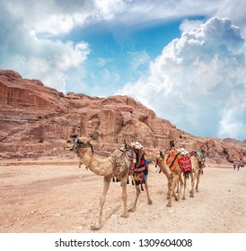 Three camels in an ancient abandoned rock city of Petra in Jordan. Petra is one of the New Seven Wonders of the World.