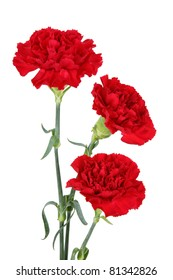Three carnation flowers isolated on white