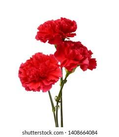 Three carnations on white background