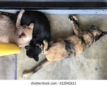 Three cat sleeping
