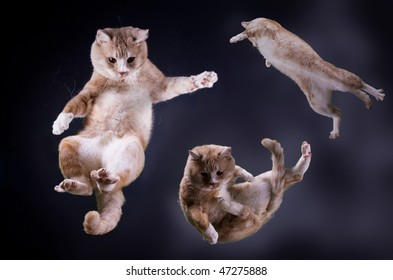Three Cats jumping in space