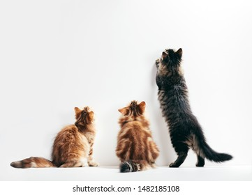 Three cats looking up the wall ready to scratch and hunt. Young kittens play time. Conceptual.