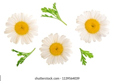 Three chamomile or daisies with leaves isolated on white background. Top view. Flat lay