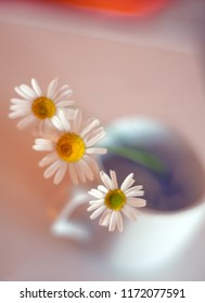 Three chamomiles flowers in porcelain coffee cup with blurred background and bokeh