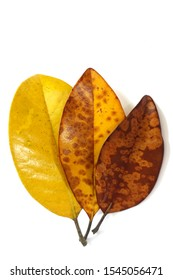 Three Changing (and Decomposing) Leaves