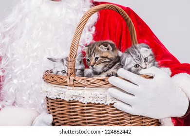 Three Christmas kittens sitting in a Christmas basket until Santa Claus holding a basket with three kittens on isolated white background in a New Year's Eve