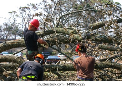 Three civil engineers cut branches of tree felled by Hurricane Katrina. Taken at Keesler AFB, MS on September 9, 2005.