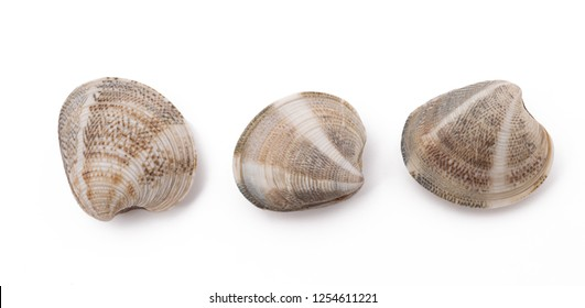 three clams isolated on white background