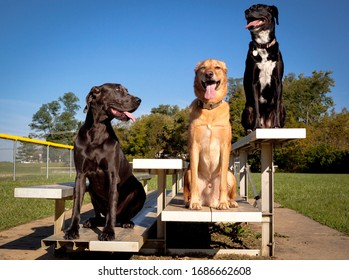 Three cogs sitting side by side on a bleacher