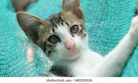 Three-colored Cat Images, Stock Photos & Vectors | Shutterstock