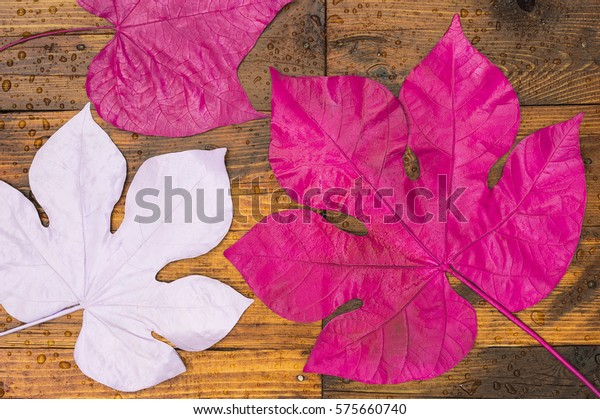 Three colored leaves on the wet wooden floor after the rain