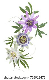 three colored passion flower hanging isolated on white