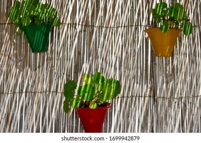 Bamboo Plant Pot Images Stock Photos Vectors Shutterstock