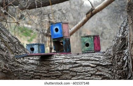 Three colorful boxlike birdhouses on a thick horizontal branch