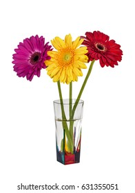 Three colorful gerberas in a vase on white background isolated