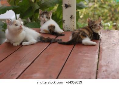 three colours cat